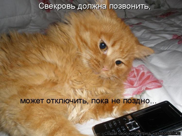 Котоматрица: Свекровь должна позвонить,  может отключить, пока не поздно...