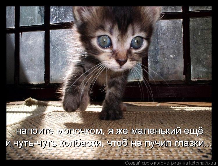 Котоматрица: напоите молочком, я же маленький ещё и чуть-чуть колбаски, чтоб не пучил глазки...