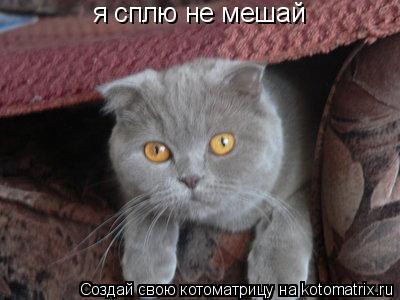 Котоматрица: я сплю не мешай
