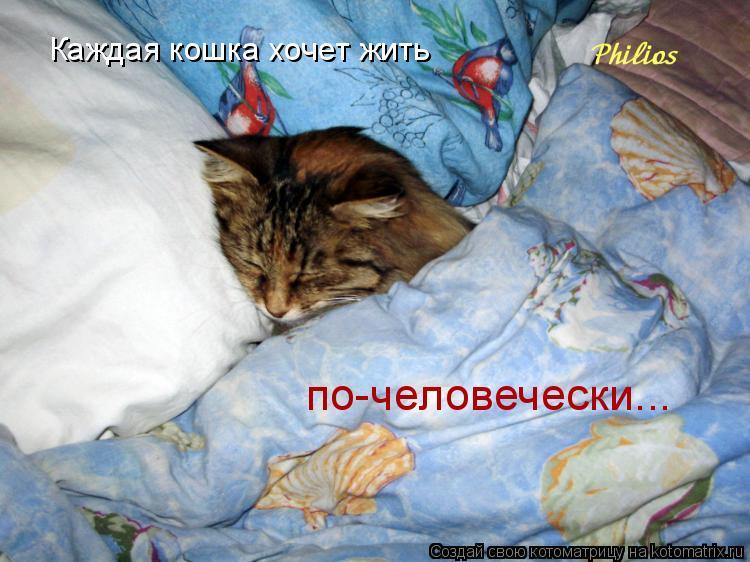 Котоматрица: Каждая кошка хочет жить  по-человечески...