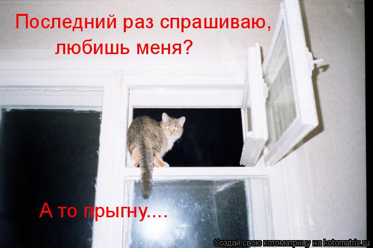 Котоматрица: Последний раз спрашиваю,  любишь меня? А то прыгну....