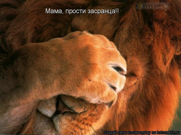 Котоматрица: Мама, прости засранца!!