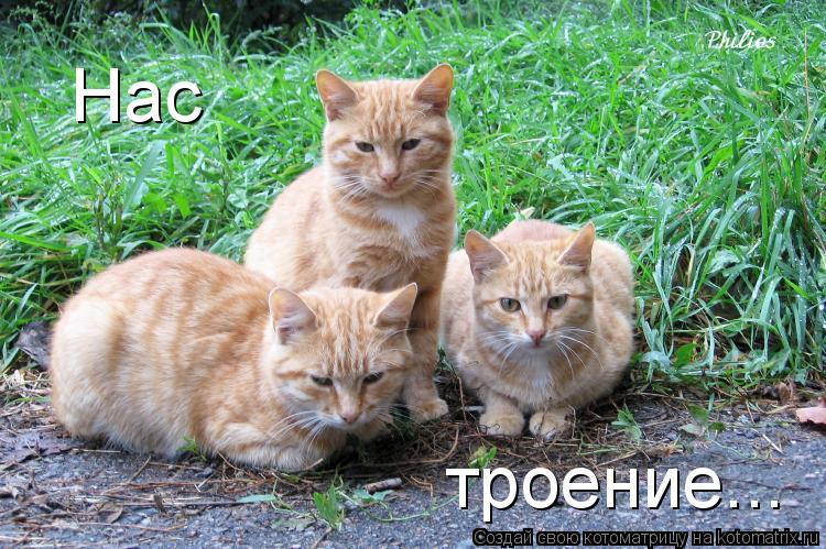 Котоматрица: Нас      троение...