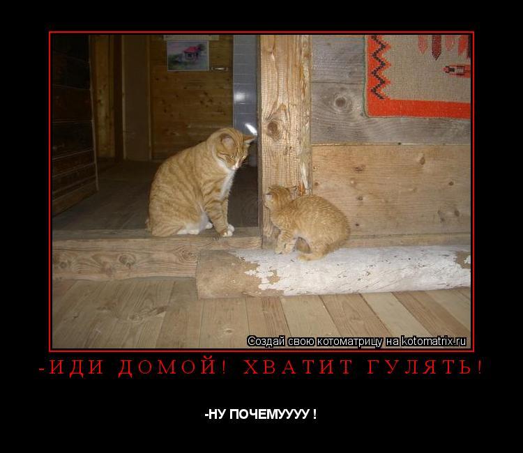 Котоматрица: -иди домой! хватит гулять! -НУ ПОЧЕМУУУУ !