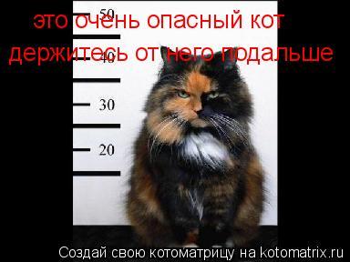 Котоматрица: это очень опасный кот  держитесь от него подальше