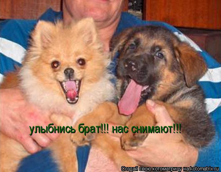 Котоматрица: улыбнись брат!!! нас снимают!!!