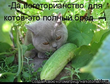 Котоматрица: -Да,вегеторианство  для котов-это полный бред.