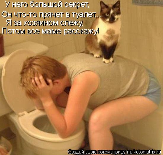 Котоматрица: У него большой секрет, Он что-то прячет в туалет... Я за хозяином слежу, Потом все маме расскажу!