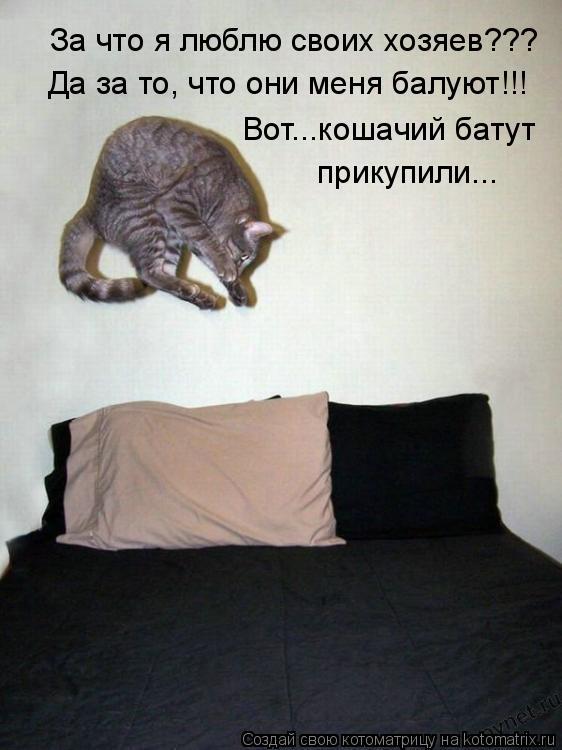 Котоматрица: За что я люблю своих хозяев??? Да за то, что они меня балуют!!! Вот...кошачий батут прикупили...