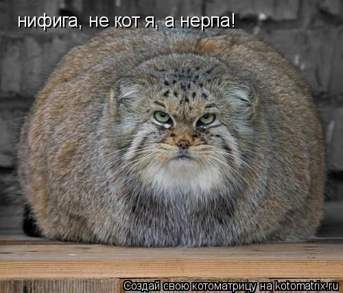 Котоматрица: нифига, не кот я, а нерпа!