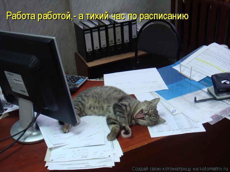 Котоматрица: Работа работой,- а тихий час по расписанию Работа работой,- а тихий час по расписанию