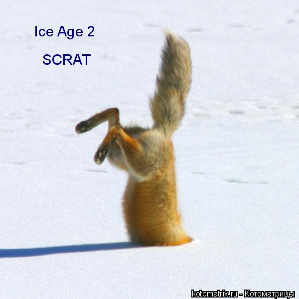 Котоматрица: Ice Age 2 SCRAT