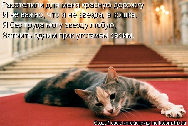 Котоматрица: И не важно, что я не звезда, а кошка.  Расстелили для меня красную дорожку  Я без труда могу звезду любую,  Затмить одним присутствием своим.