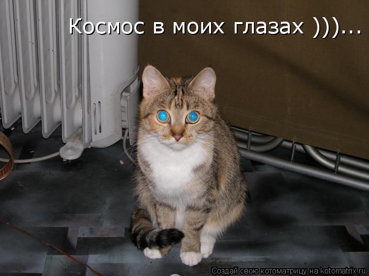 Котоматрица: Космос в моих глазах )))...