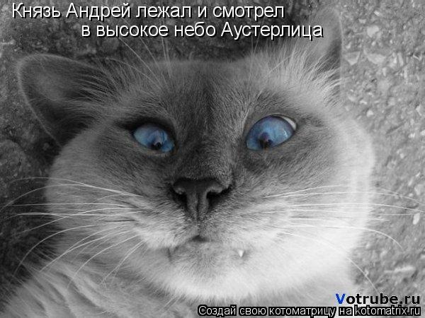 Котоматрица: Князь Андрей лежал и смотрел  в высокое небо Аустерлица