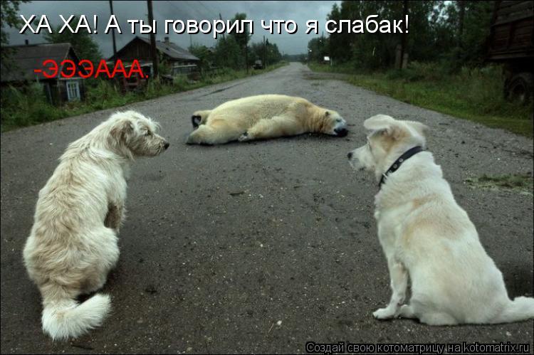 Котоматрица: ХА ХА! А ты говорил что я слабак! -ЭЭЭААА.