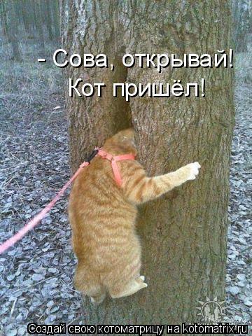 Котоматрица: - Сова, открывай!  Кот пришёл!