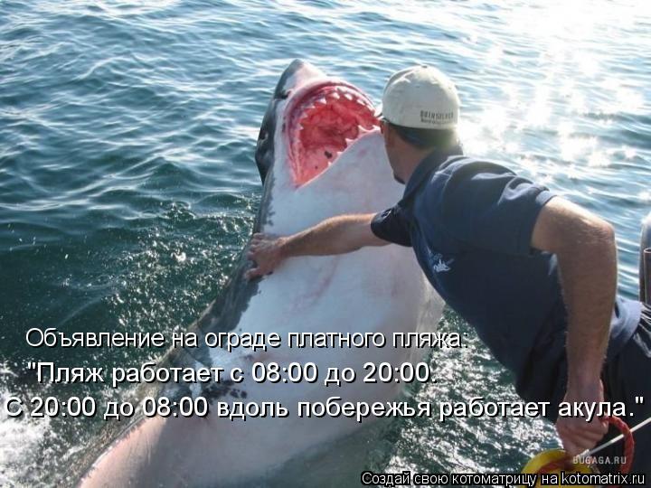 """Котоматрица: Объявление на ограде платного пляжа: """"Пляж работает с 08:00 до 20:00. С 20:00 до 08:00 вдоль побережья работает акула."""""""