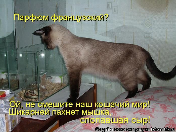 Котоматрица: Парфюм французский? Ой, не смешите наш кошачий мир! Шикарней пахнет мышка,  слопавшая сыр!