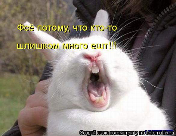 Котоматрица: Фсё потому, что кто-то шлишком много ешт!!!