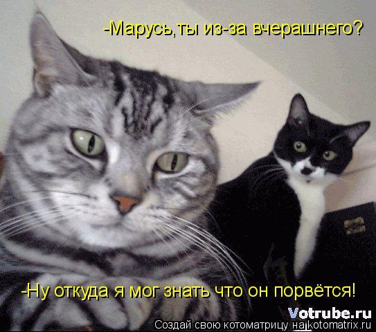 Котоматрица: -Марусь,ты из-за вчерашнего? -Ну откуда я мог знать что он порвётся!