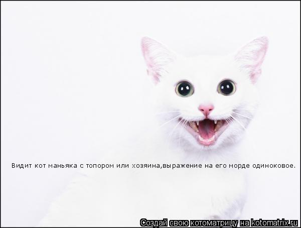 Котоматрица: Видит кот маньяка с топором или хозяина,выражение на его морде одиноковое.