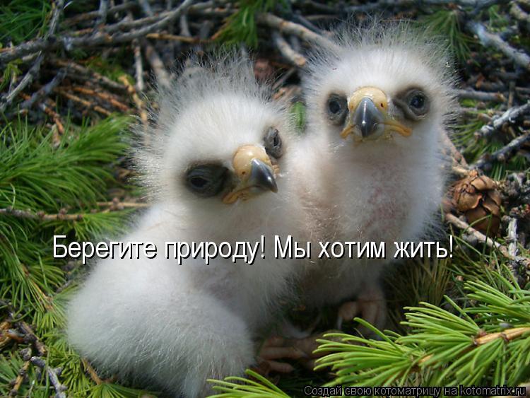 Котоматрица: Берегите природу! Мы хотим жить!