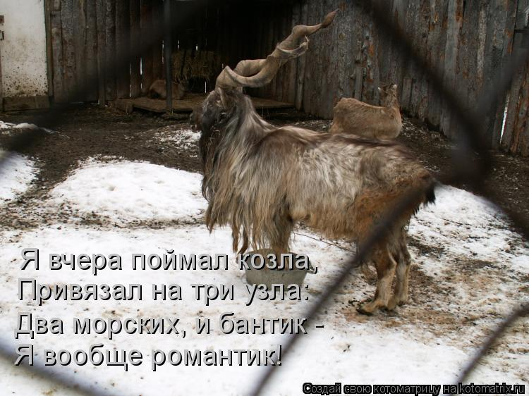 Котоматрица: Я вчера поймал козла,  Привязал на три узла: Два морских, и бантик -  Я вообще романтик!