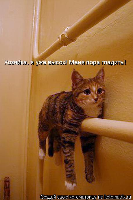 Котоматрица: Хозяйка, я уже высох! Меня пора гладить!