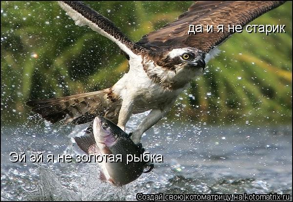Котоматрица: Эй эй я не золотая рыбка  да и я не старик