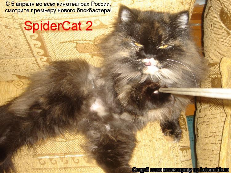 Котоматрица: С 5 апреля во всех кинотеатрах России, смотрите премьеру нового блокбастера! SpiderCat 2