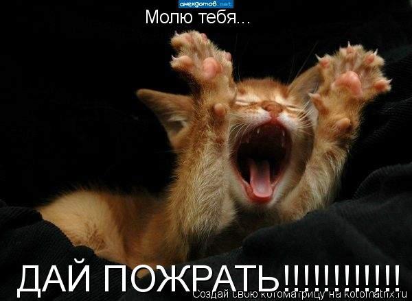 Котоматрица: Молю тебя... ДАЙ ПОЖРАТЬ!!!!!!!!!!!!