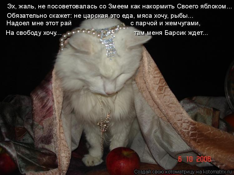 Котоматрица: Эх, жаль, не посоветовалась со Змеем как накормить Своего яблоком... Обязательно скажет: не царская это еда, мяса хочу, рыбы... Надоел мне этот