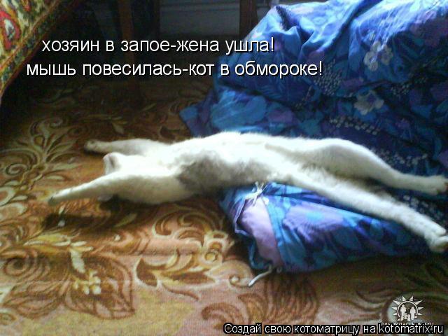 Котоматрица: мышь повесилась-кот в обмороке! мышь повесилась-кот в обмороке! хозяин в запое-жена ушла!