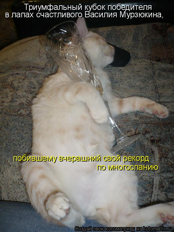 Котоматрица: Триумфальный кубок победителя  в лапах счастливого Василия Мурзюкина, побившему вчерашний свой рекорд по многоспанию