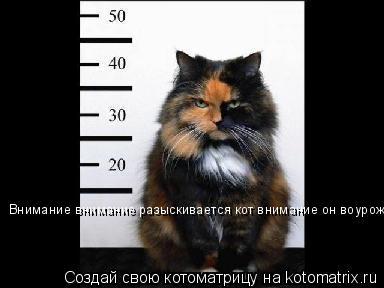 Котоматрица: Внимание внимание разыскивается кот внимание он воурожон!