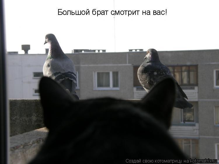 Котоматрица: Большой брат смотрит на вас!