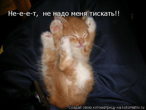 Котоматрица: Не-е-е-т,  не надо меня тискать!!