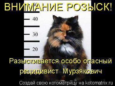 Котоматрица: ВНИМАНИЕ РОЗЫСК!  Разыскивается особо опасный  рецидивист  Мурзякович