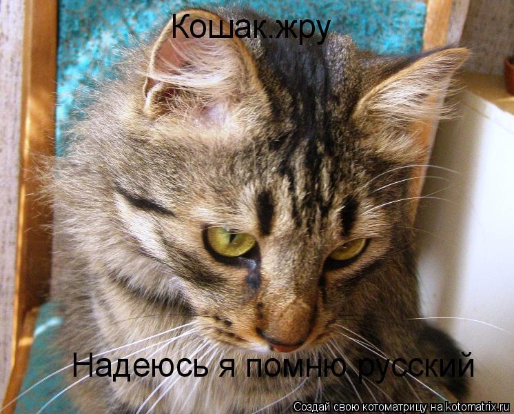 Котоматрица: Надеюсь я помню русский Кошак.жру