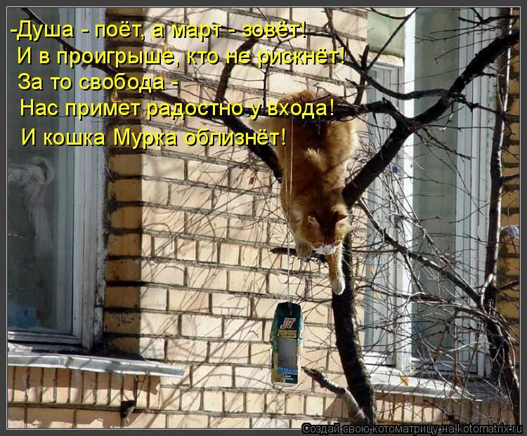 Котоматрица: -Душа - поёт, а март - зовёт! И в проигрыше, кто не рискнёт! За то свобода - Нас примет радостно у входа! И кошка Мурка облизнёт!