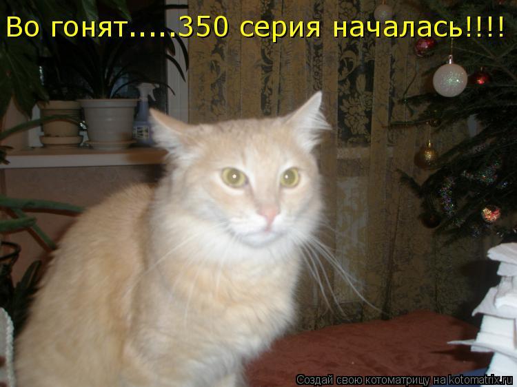 Котоматрица: Во гонят.....350 серия началась!!!!