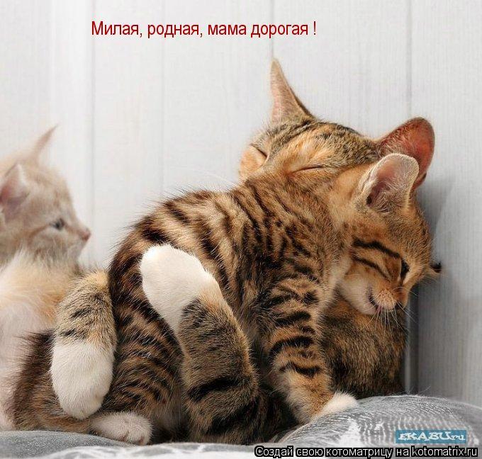 Котоматрица: Милая, родная, мама дорогая !