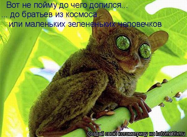 Котоматрица: Вот не пойму до чего допился... ... до братьев из космоса или маленьких зелененьких человечков