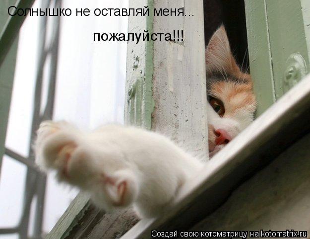 Котоматрица: пожалуйста!!! Солнышко не оставляй меня...
