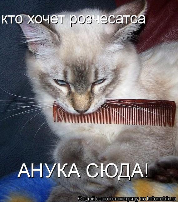 Котоматрица: кто хочет розчесатса АНУКА СЮДА!