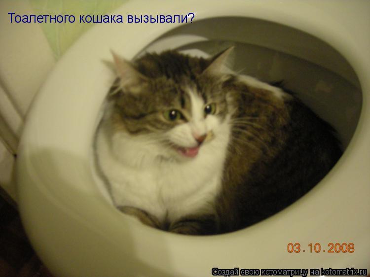 Котоматрица: Тоалетного кошака вызывали?