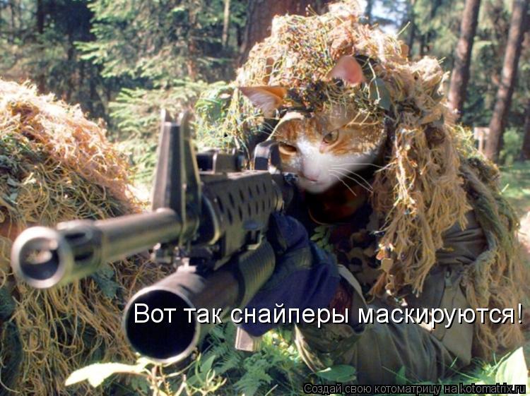Котоматрица: Вот так снайперы маскируются!