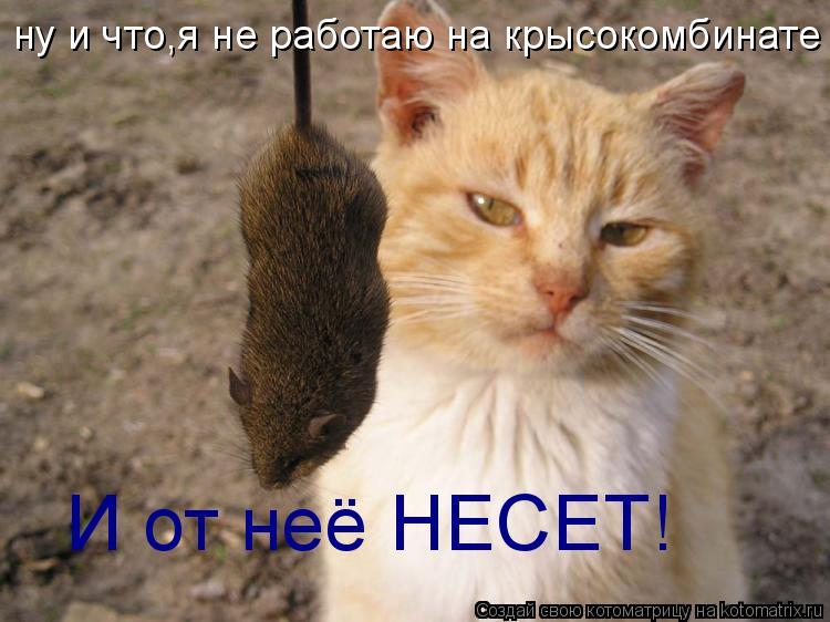 Котоматрица: ну и что,я не работаю на крысокомбинате И от неё НЕСЕТ!