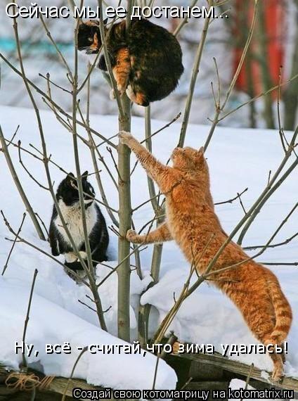 Котоматрица: Сейчас мы ее достанем... Ну, всё - считай,что зима удалась! Ну, всё - считай,что зима удалась!